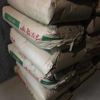 平成30年度産 無農薬 あいちのかおり 玄米30kg 在庫処分