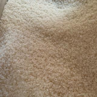 新米 ヒノヒカリ、キヌムスメ、キヌヒカリ、玄米30kg - 和歌山市
