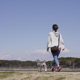 柏市のペットシッター、散歩代行、ペット介護は経験豊富なシッターに...