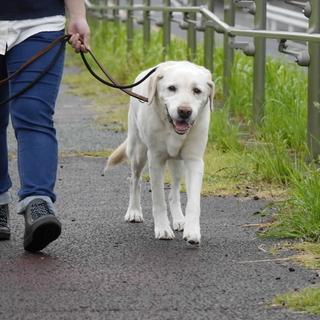 松戸市のペットシッター、散歩代行、ペット介護は経験豊富なシッター...