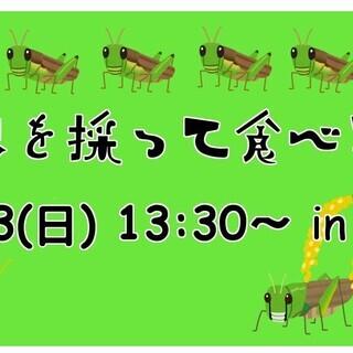 昆虫を採って食べる会 in 御宿 ~バッタ会~