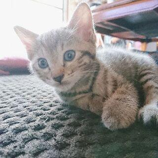 生後1ヶ月の子猫チャン🐈 - 猫