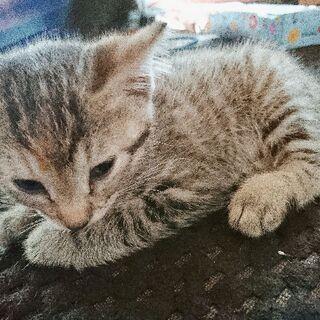 生後1ヶ月の子猫チャン🐈 − 千葉県