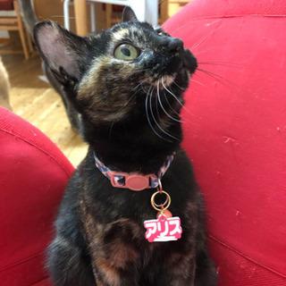 めっちゃ性格いいゴロスリサビ猫一歳