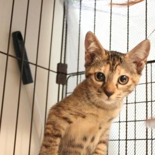 決まりました : かわいい猫達の里親募集