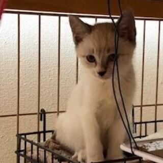 生後2ヶ月の可愛く小さい姉妹の子猫ちゃんたち
