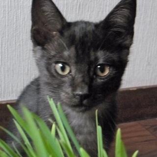 ごまちゃん子猫 4カ月