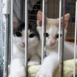 長毛の仲良し兄弟子猫