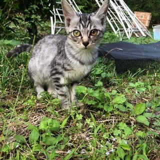 捨てられた子猫をお願いします!