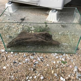 45cmスリム水槽
