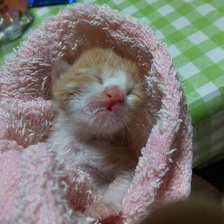 里親様が決まりました。生まれたばかりの仔猫ちゃん、