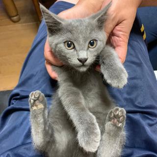 母猫里親さん募集中 (子猫3匹は決まりました)飼主不在の確認済みです!