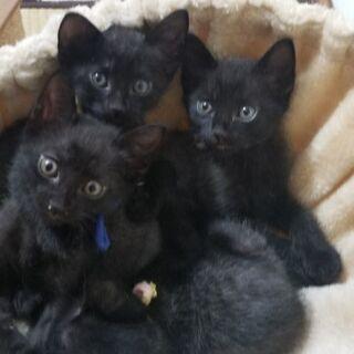黒猫兄弟 オス2匹