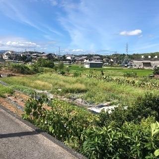 田んぼ 大阪府羽曳野市(300坪)