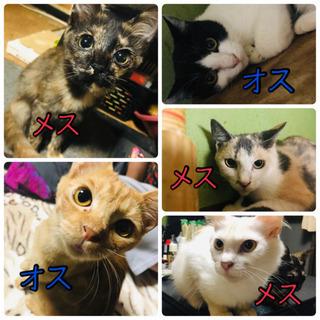 5匹の猫ちゃんの里親