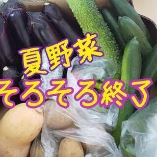 夏野菜【よねベジ】