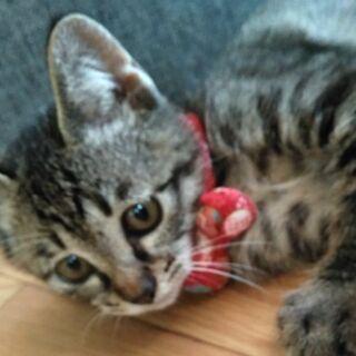 癒し系4ヶ月雄子猫