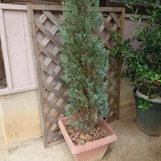 観葉植物(2鉢)