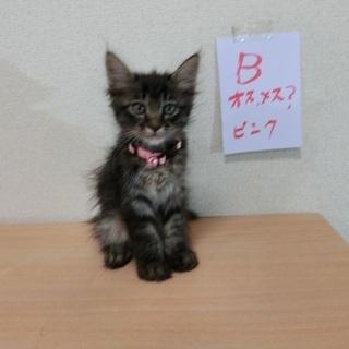 2ヶ月  子猫5姉妹