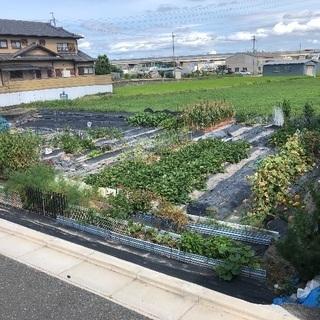 田んぼ(150坪) 農地 大阪府羽曳野市