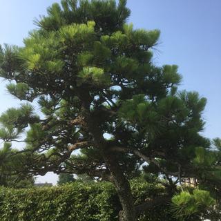 植木屋剪定、伐採、284(^^)