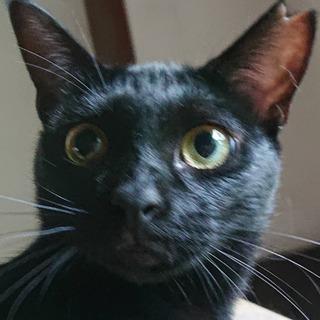 とっても可愛い黒猫女の子   かりんちゃん❣️