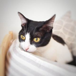 おとな猫なのに子猫みたいに小柄なチリン
