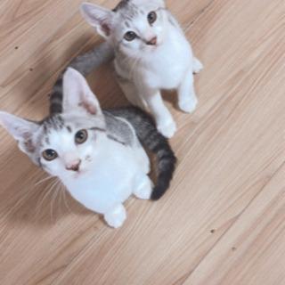 綺麗な子猫兄弟