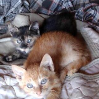 生後1ヶ月位の双子の可愛い猫ちゃん