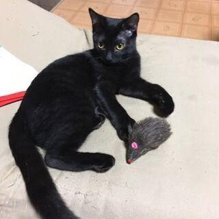 可愛い黒猫ちゃん♥️