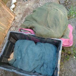 昭和 蚊帳