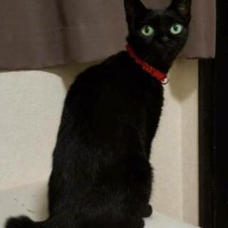 【急募!!】先日保護した黒猫ちゃんです!!