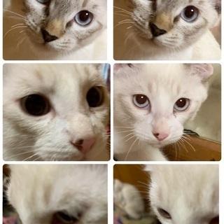 3カ月くらいの子猫