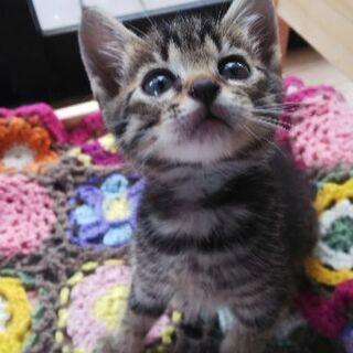 里親様募集。生後2ヶ月くらいの子猫。