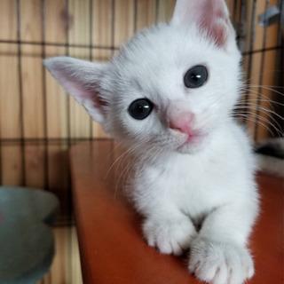 保護子猫ちゃん2匹🐱2匹共は決まりました!ありがとう😊