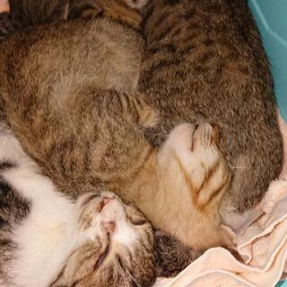 4匹の兄弟猫です。1匹からでも可能です。