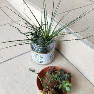 エアープランツと多肉植物✿❀【里子❤】