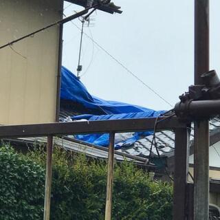 台風 ブルーシート張ります!