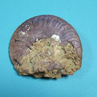 アンモナイト化石2