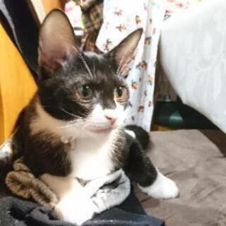 猫にも人にもフレンドリーな女の子です。