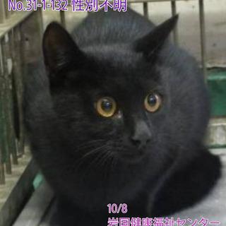 綺麗な瞳の黒猫ちゃん。