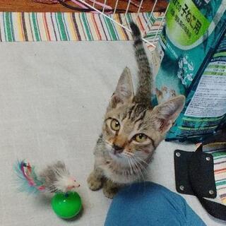 «里親募集» とても人懐っこい子猫です!