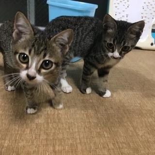 2匹の子猫の里親さん募集中〜チョコとココア