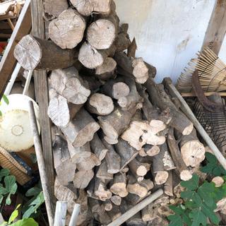薪(みかんの木)2
