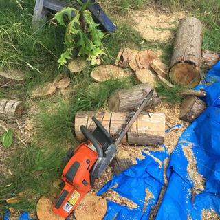 倒木処理.伐採等