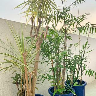 アレカヤシ×2,ドラセナ 観葉植物セット