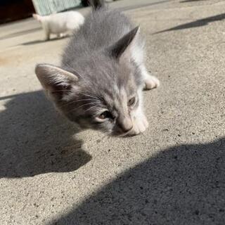 8月23日生まれの子猫です。