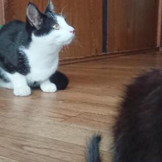 黒白、その他の二匹の子猫差し上げます。