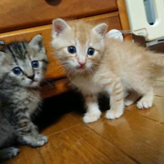 兄妹でもらってくれる方💓 保護猫