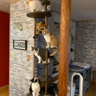 キャットタワー・家具職人に作って貰った物です。